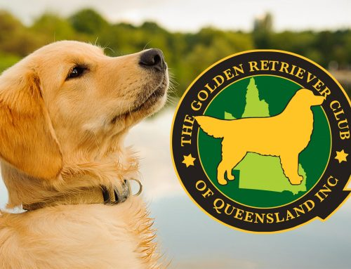 The Golden Retriever Club of Queensland